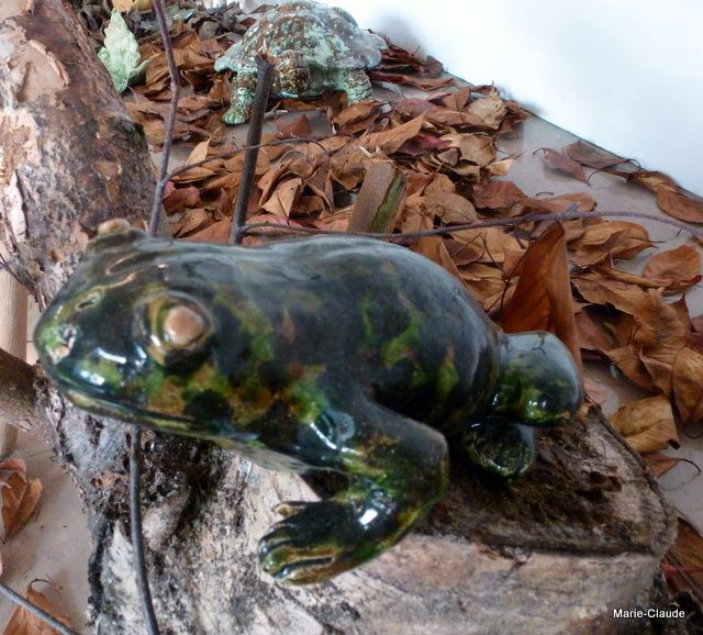 Dame grenouille sortie de sa mare pour vous dire bonjour,