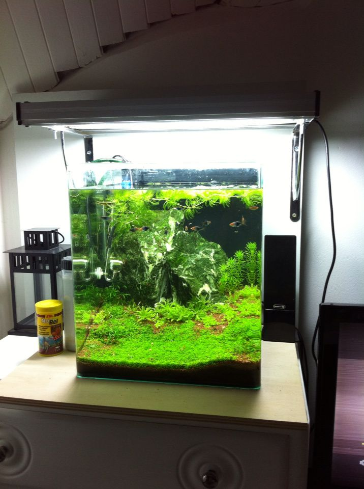 nano cube dennerle 60 litres mise jour aquascaping et aquariophilie art et passion. Black Bedroom Furniture Sets. Home Design Ideas