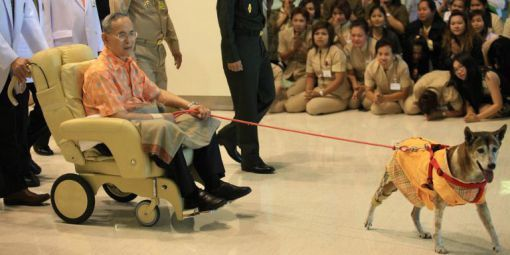 Le roi Bhumibol Adulyadej accompagné de son chien Thongdaeng, le 18 octobre 2012. © AFP/Bangkok Post photo/Patipat Janthong