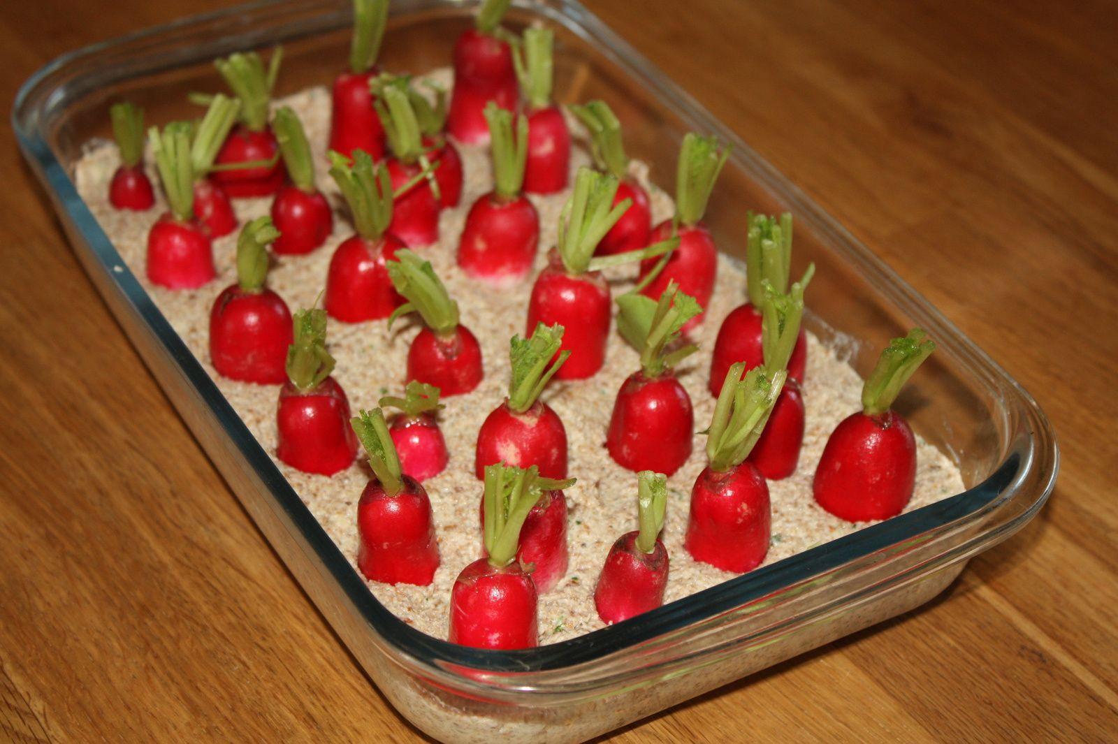 Pour changer des radis-beurre, 2 recettes pour l'apéro: rillettes de radis au chèvre et radis dans leur potager