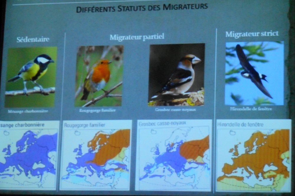 Oiseaux migrateurs avec Nature 18
