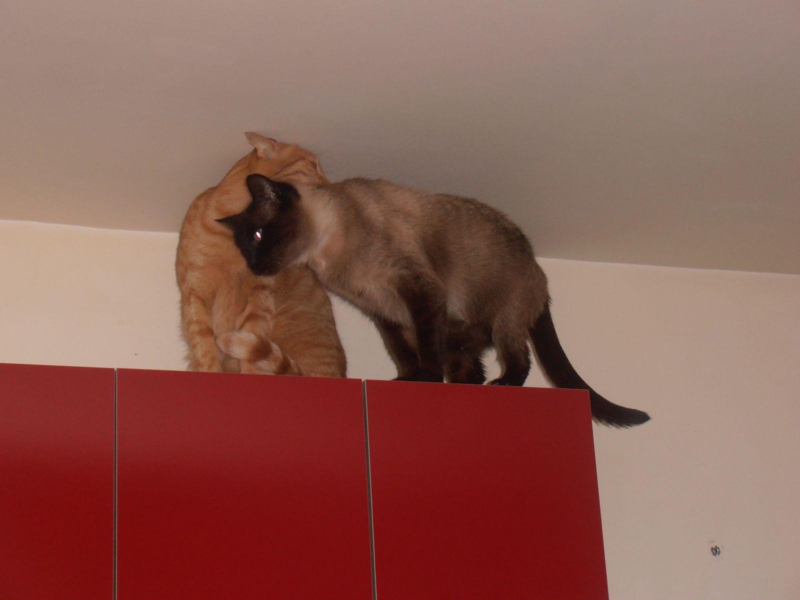 Les chats qui guettent!!
