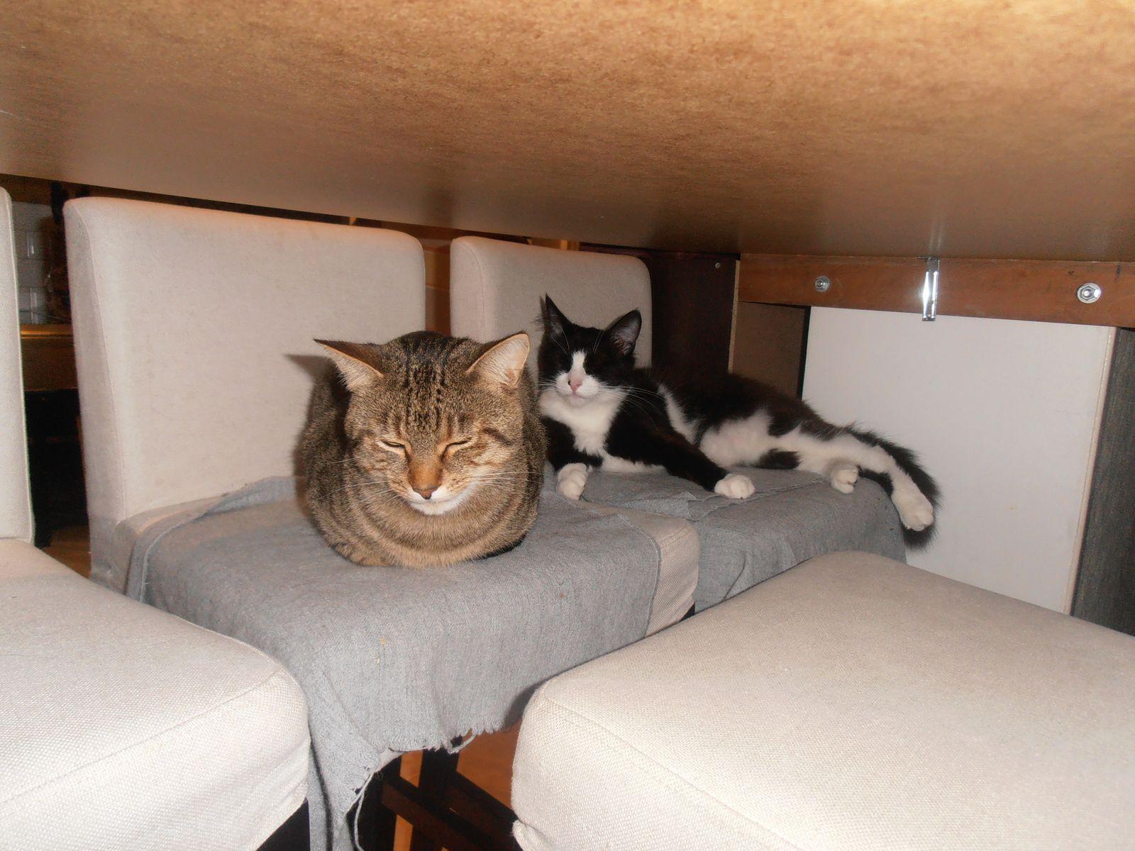 Les chats nous accueillent quand on rentre!