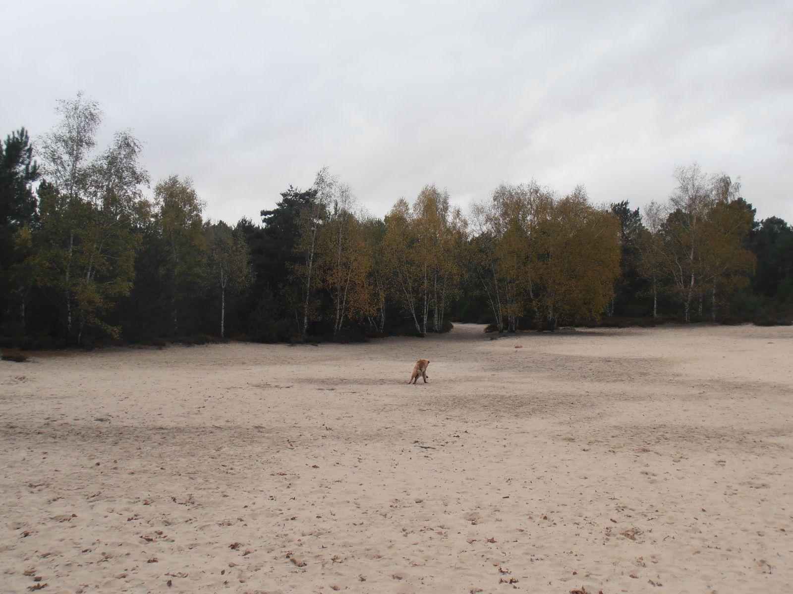balade aux sables de cul de chien