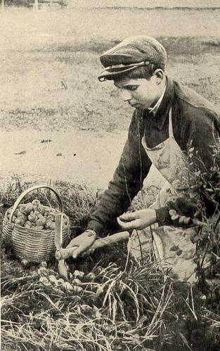 Reglementation ramassage escargots