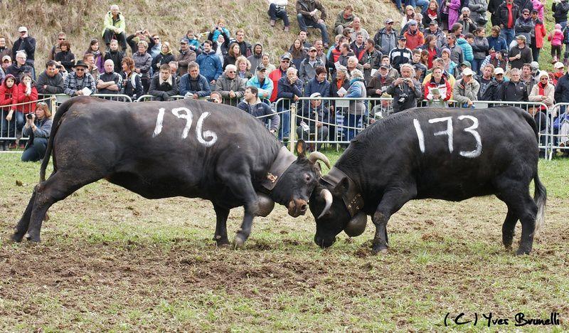(196) ROSEAU de Paul et Olivier Rossier et (173) PATOUCHE , classée 4ème ex-aequo de 5ème catégorie d'Henri Follonier