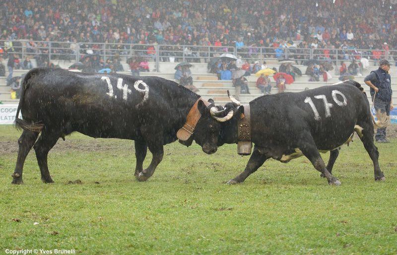 (171) CAPRICE de Borinato Arnod et (149) CINGUETTA de la Borrettaz , classée 3ème de 3ème catégorie