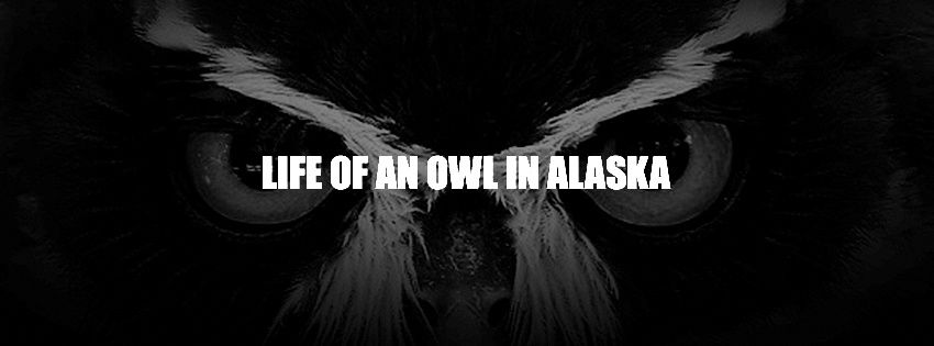 Life of an owl in Alaska @ Rock Classic - 12/12/2015 - 21h00 - Entrée gratuite !