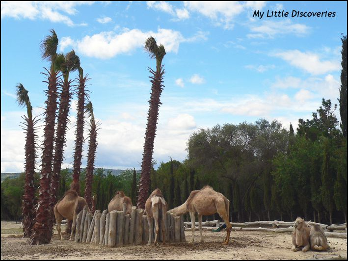Mon mini-safari à la Réserve de Sigean!