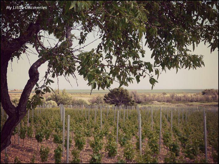Gruissan #4: la plage des Chalets, les vignes et l'étang