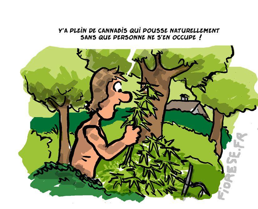 Blog-dessinée
