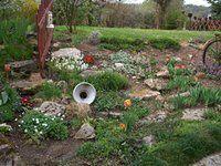 rocaille avec tulipes, anémones, muscaris bleu.