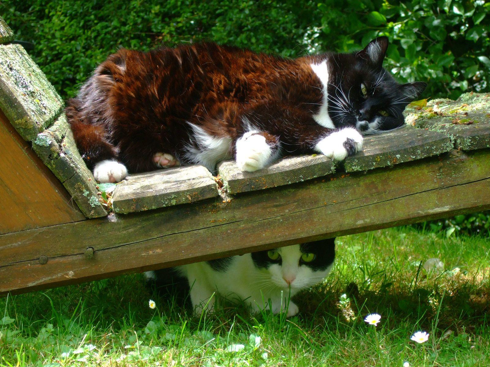 """Bonjour les gens, ce matin à 7h : 14° 3   Mes chats ne demandent pas à aller dehors la nuit,"""" pas bon signe"""", je me demande encore comment est-ce qu'ils peuvent savoir le temps qu'il fait alors qu'ils sont dans la maison !!! C'est la question du jour.... Bonne journée à tous et à toutes avec le sourire et bon dimanche. - (Minou et Isy)"""