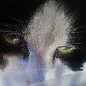 Déjà publié précédemment ........ma pupuce Isy....petite chatte européenne de 4 ans ......