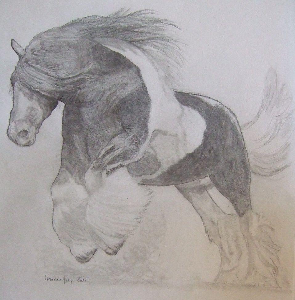 tinker ! ou irish cob en Irlande ! superbe cheval à la force étonnante ..