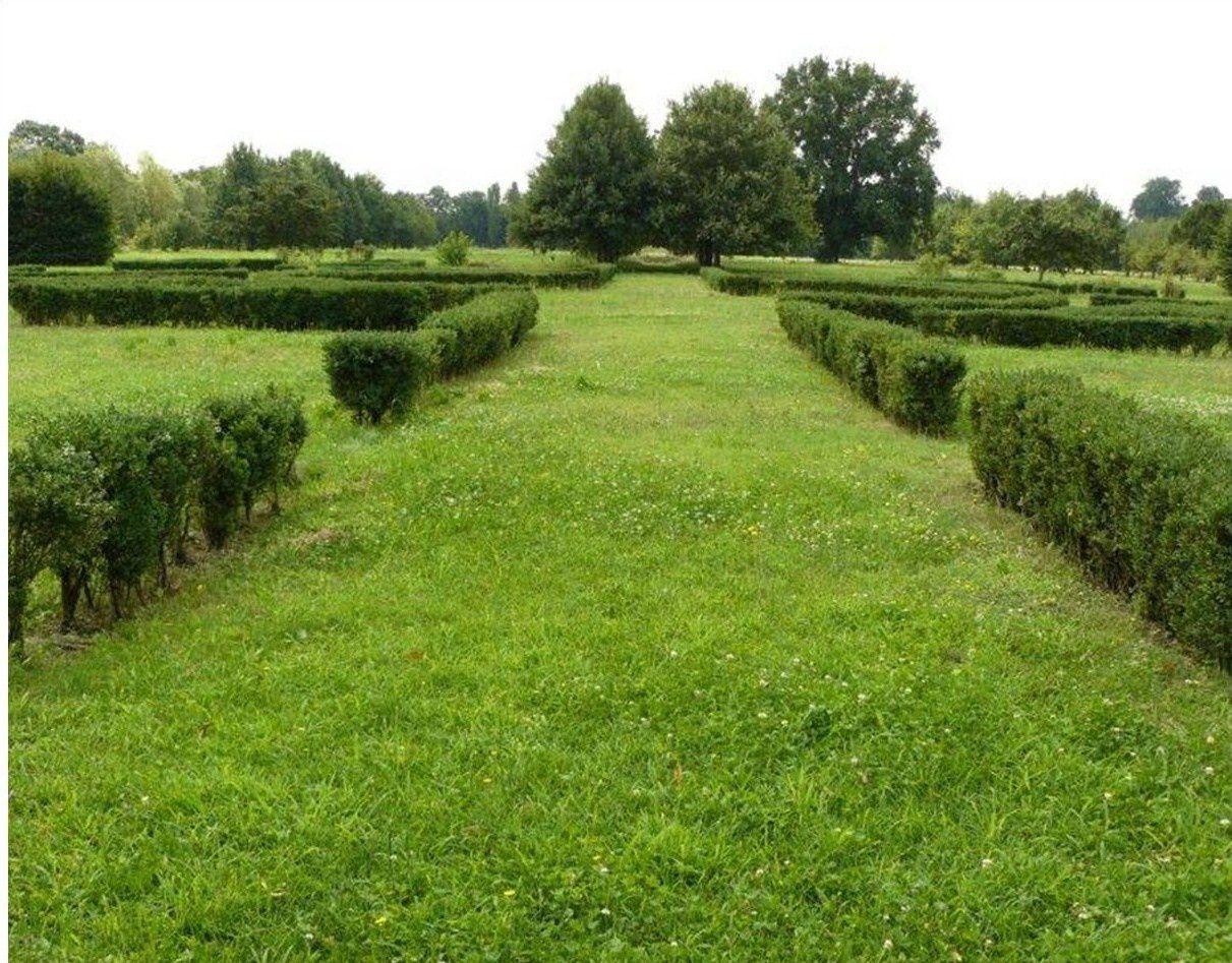 Parco in Villa Annoni - siepi di bosso