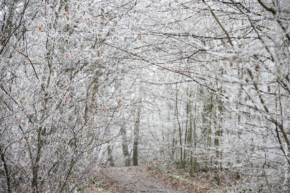 La nature en mode &quot&#x3B;Noir &amp&#x3B; blanc&quot&#x3B;