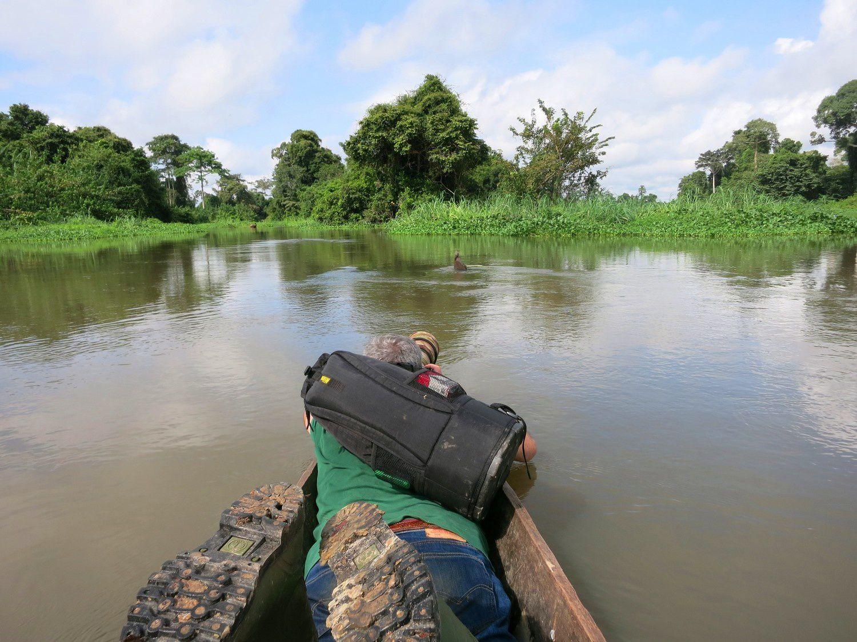 Approche en pirogue d'une Glaréole Auréolée, posée sur un rocher du fleuve Bandama (photo Etienne Leroy) - Taboitien (près de Tassiale), Côte d'Ivoire, 09 novembre 2014