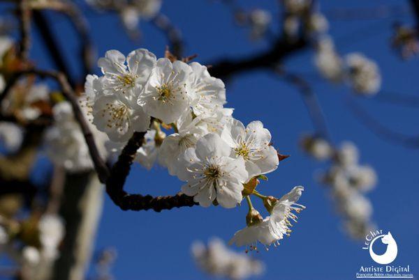 Jours de printemps ! Fleurs et fruits hauts en couleurs.