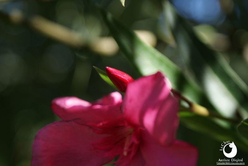 Dernières fleurs avant l'automne