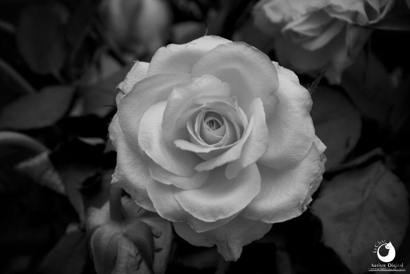 En noir et blanc... et en couleurs !