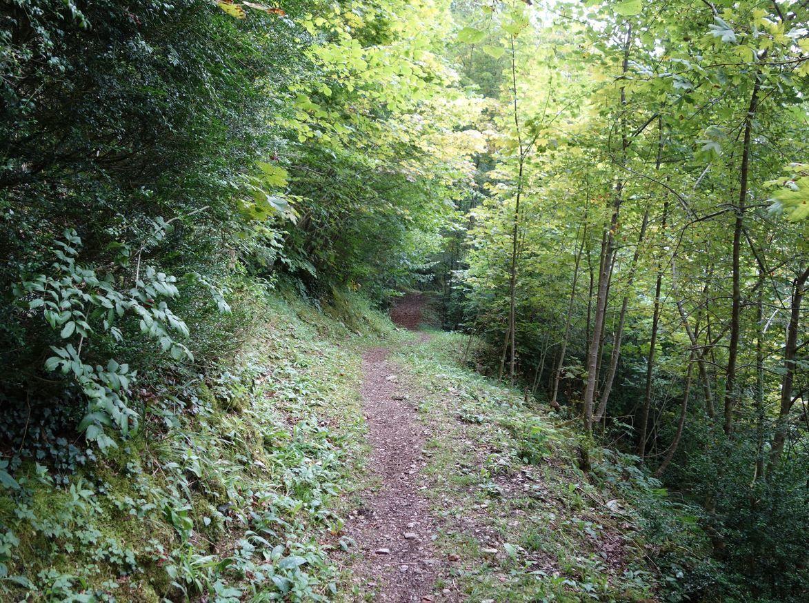 Le chemin est large, stable, peu vertigineux et s'opère dans une forêt relativement dense ( le bois d'Assouste ).