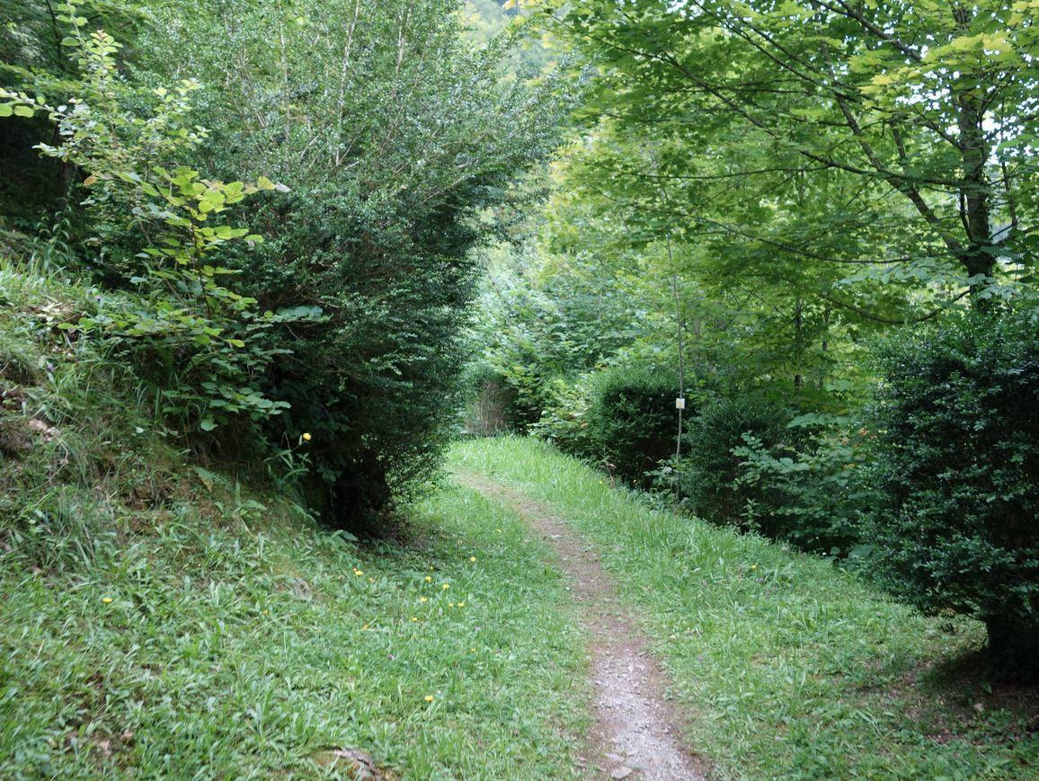 A cette source vous verrez sur sa droite un chemin pédestres relativement herbeux, monter à flanc de colline prenez le et suivez le balisage jaune de la balade des princes.