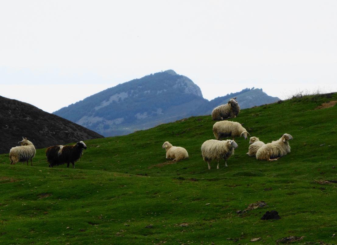 Tour du Soum de Grum via Col d'Aubisque ( Pyrénées-Atlantiques 64 ) AA Rando