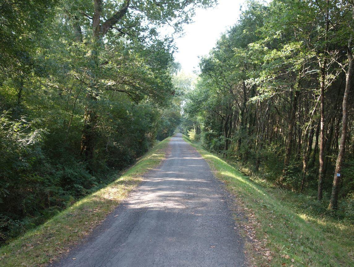 Le début de la randonnée sera par moment bien ombragée.