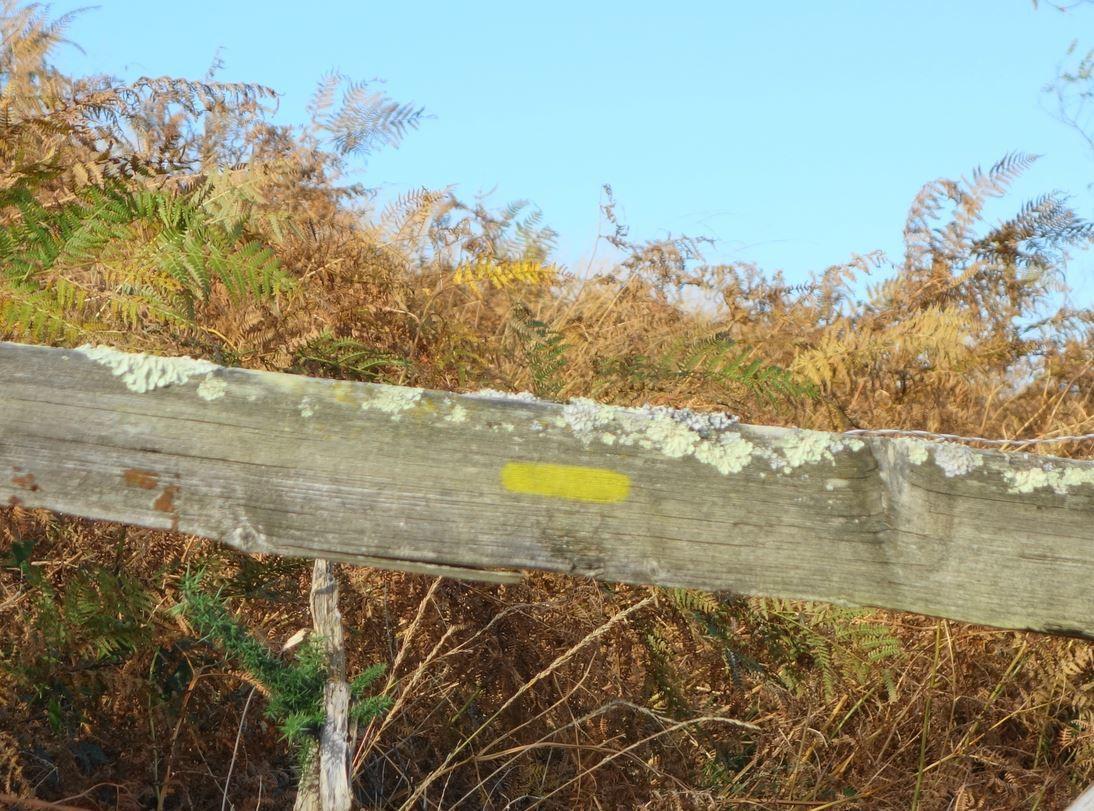 Le balisage à suivre était indiqué en jaune lors de mon passage.