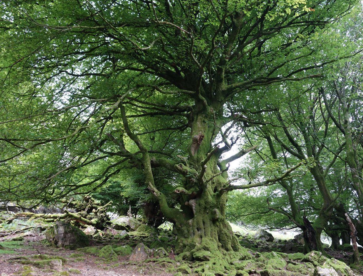 Ces arbres et nature que j'aimerais vous partager