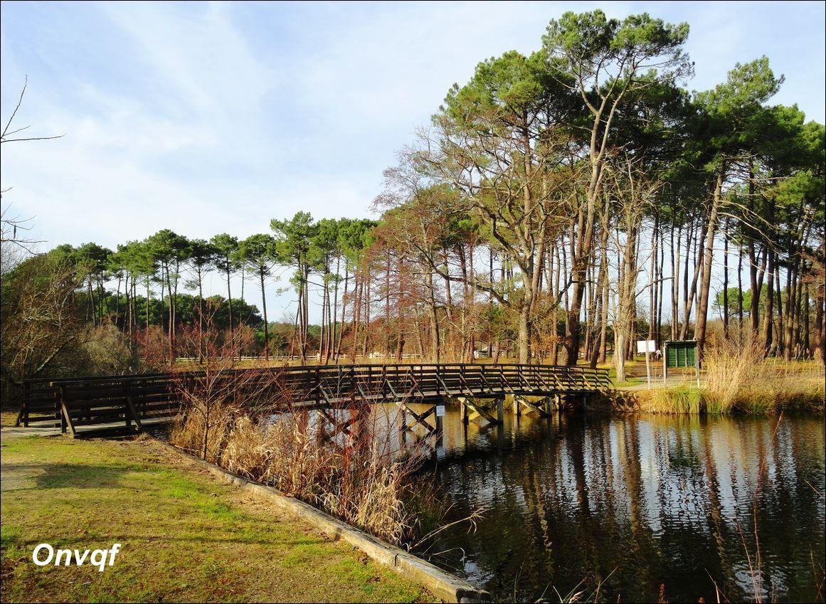 Etang de Mimizan  / Etang d'Aureilhan (Landes 40) AA Promenade