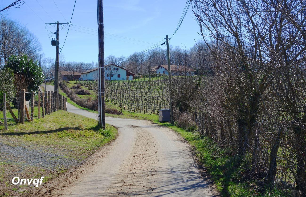 Balade dans les vignes d'Irouléguy (Pyrénées-Atlantiques 64) AA