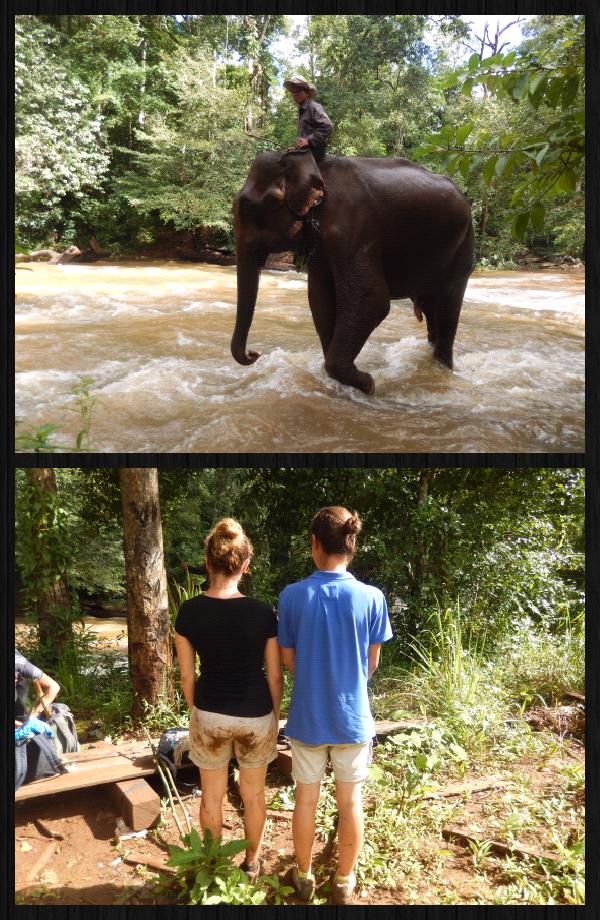 un elephant qui s' avère être notre éléphant du lendemain. (photo du bas: yen a une tombe et l'autre pas!)