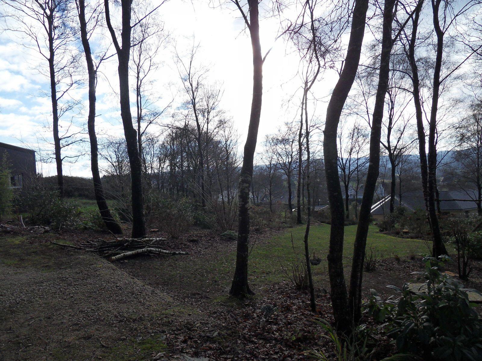 25 arbres abattus sur cette partie , on a du mal à le croire !!!