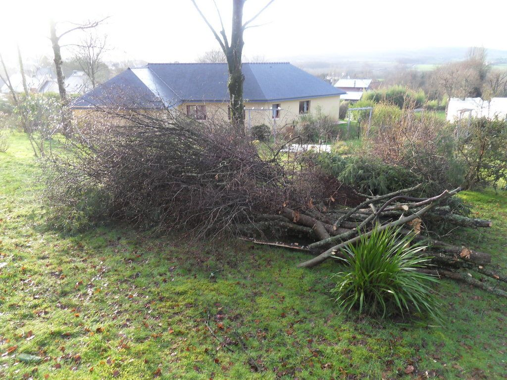abattage d'arbres dans mon bois