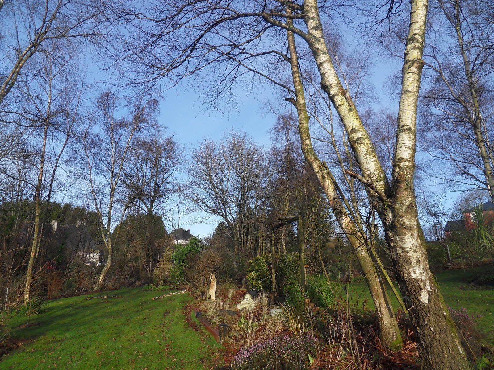 voila ce qu'il reste en arbres , pas mal encore debout !!! le jardin est plus clair , il y aura toujours assez d'ombre ..