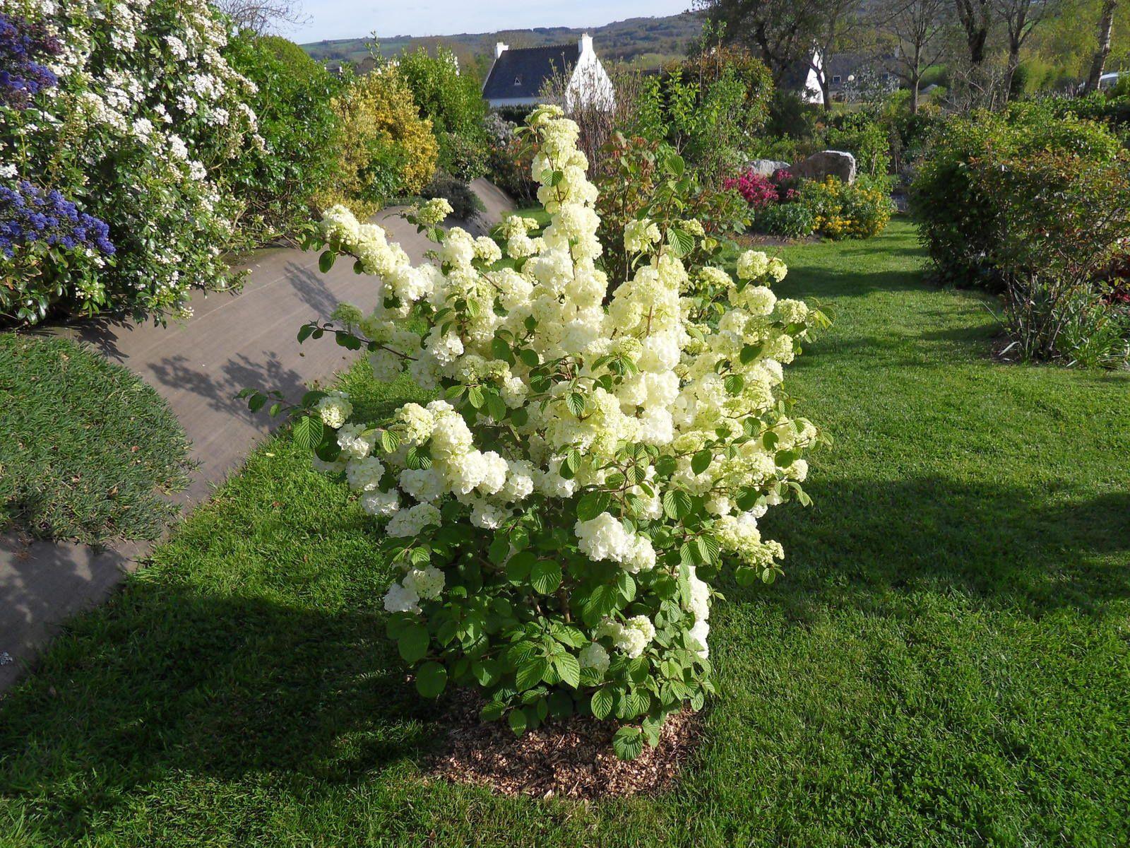 l 39 arbuste du mois le jardin de danyland en bretagne. Black Bedroom Furniture Sets. Home Design Ideas