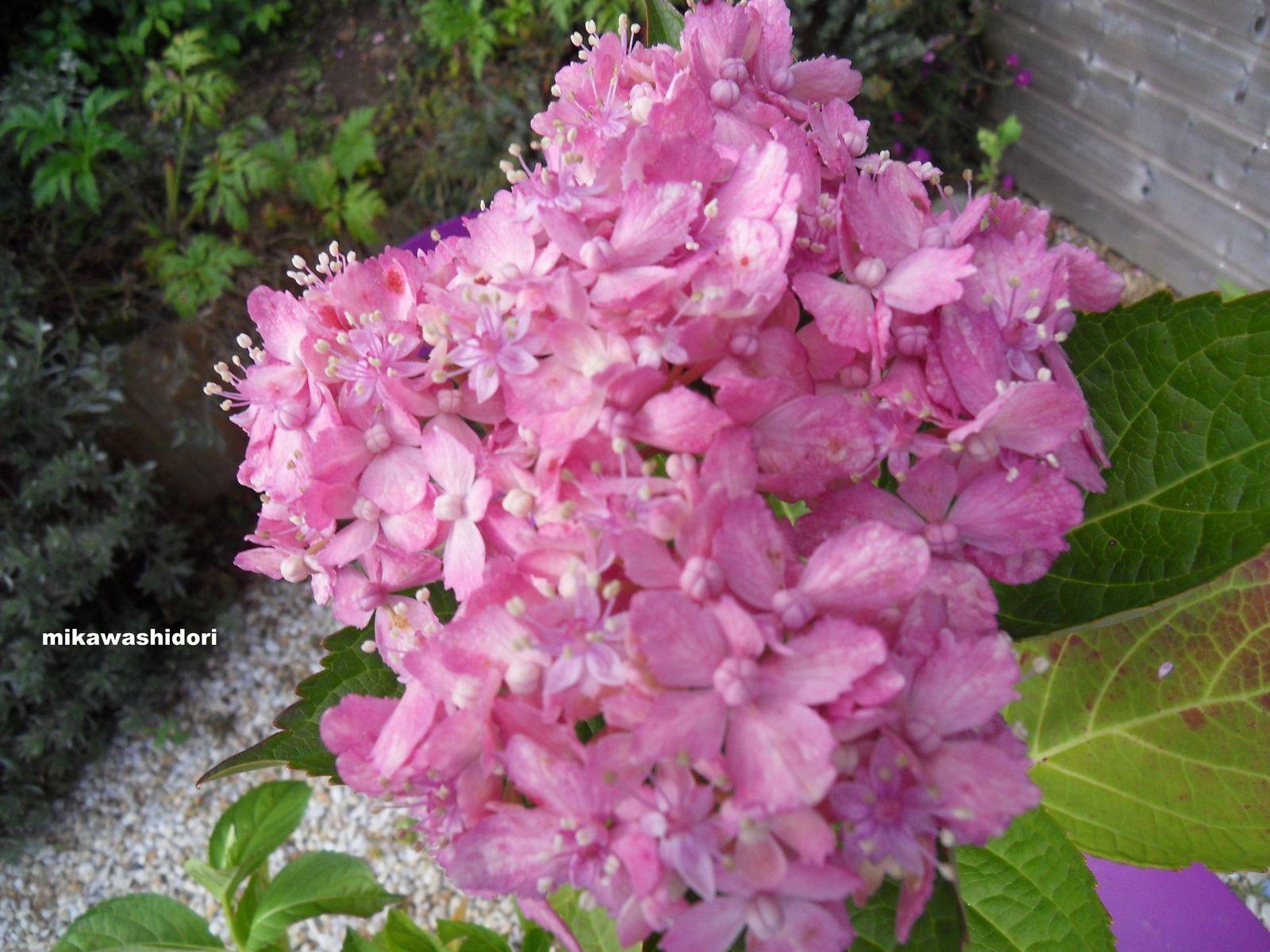 13 nouveautés au jardin des hortensias