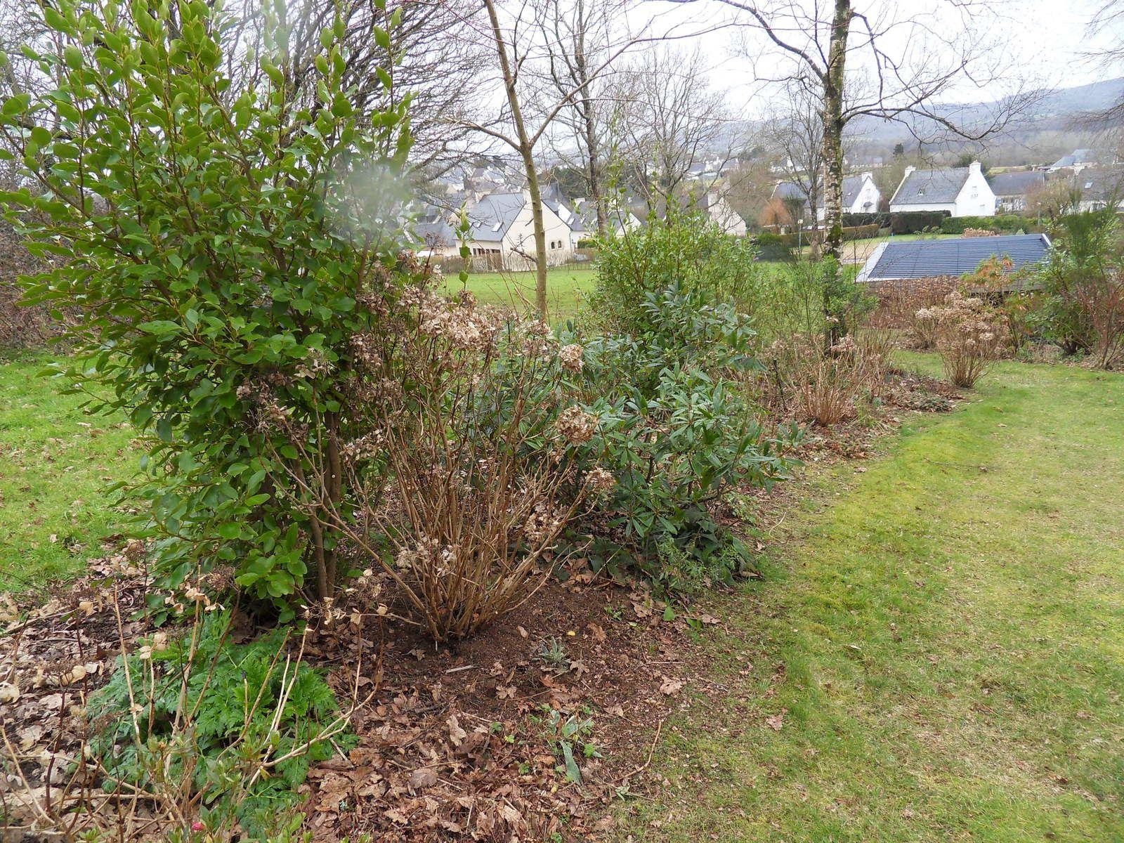 3 nouveaux  hortensias en plein virage pour 2015 .....