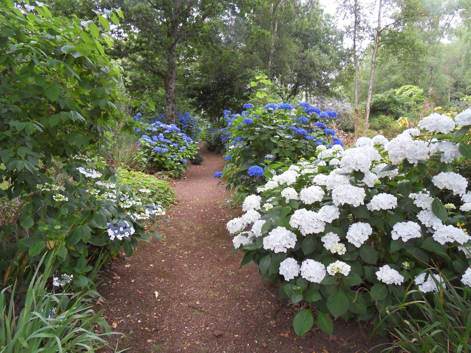 mi juillet au jardin