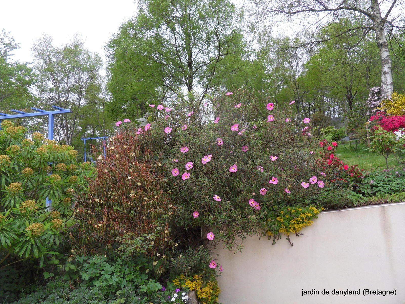 8 mai 2016 , le jardin explose !!