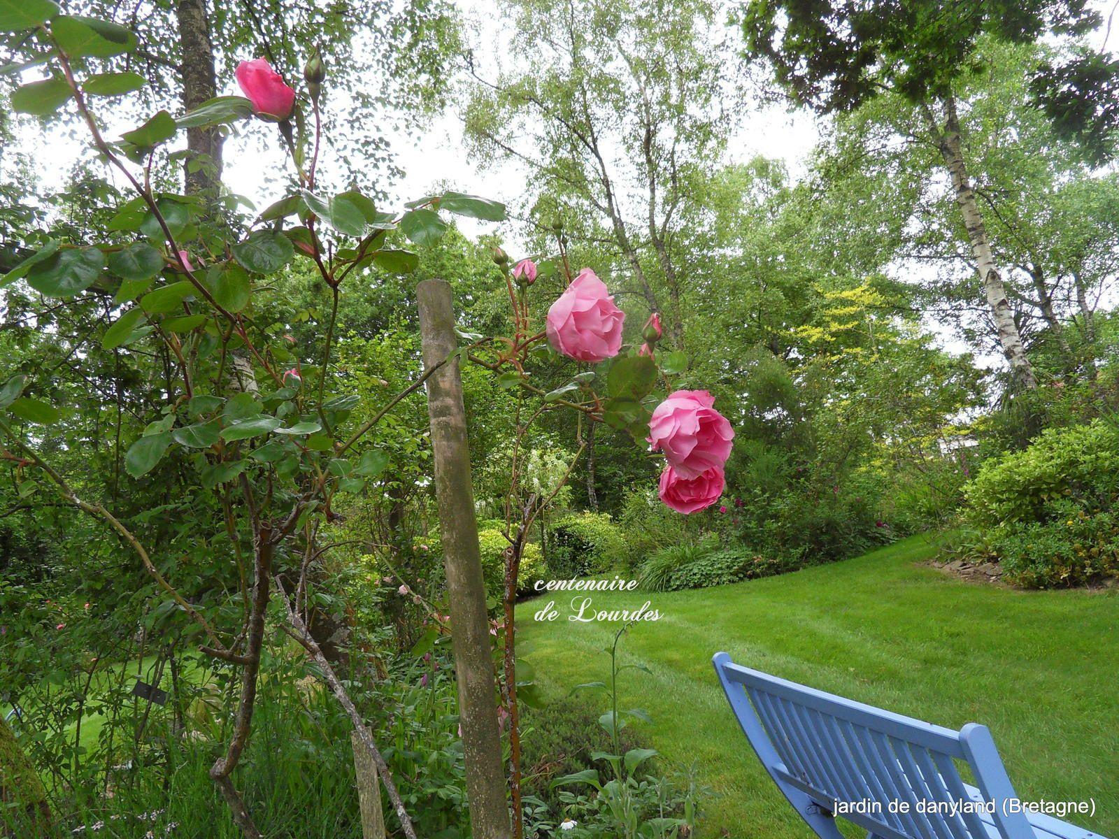Le temps des roses est arrivé !!!