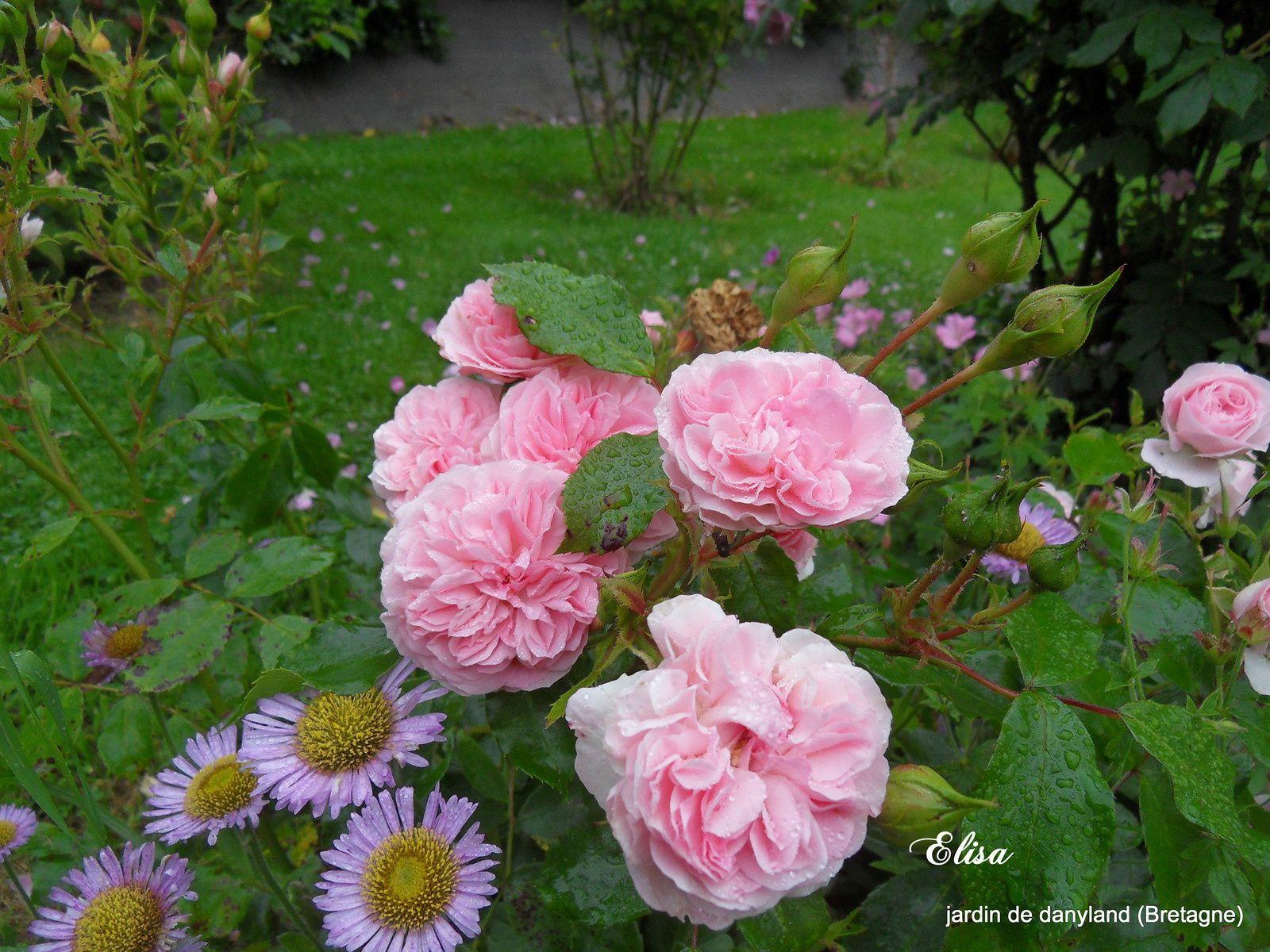 10 juillet au jardin