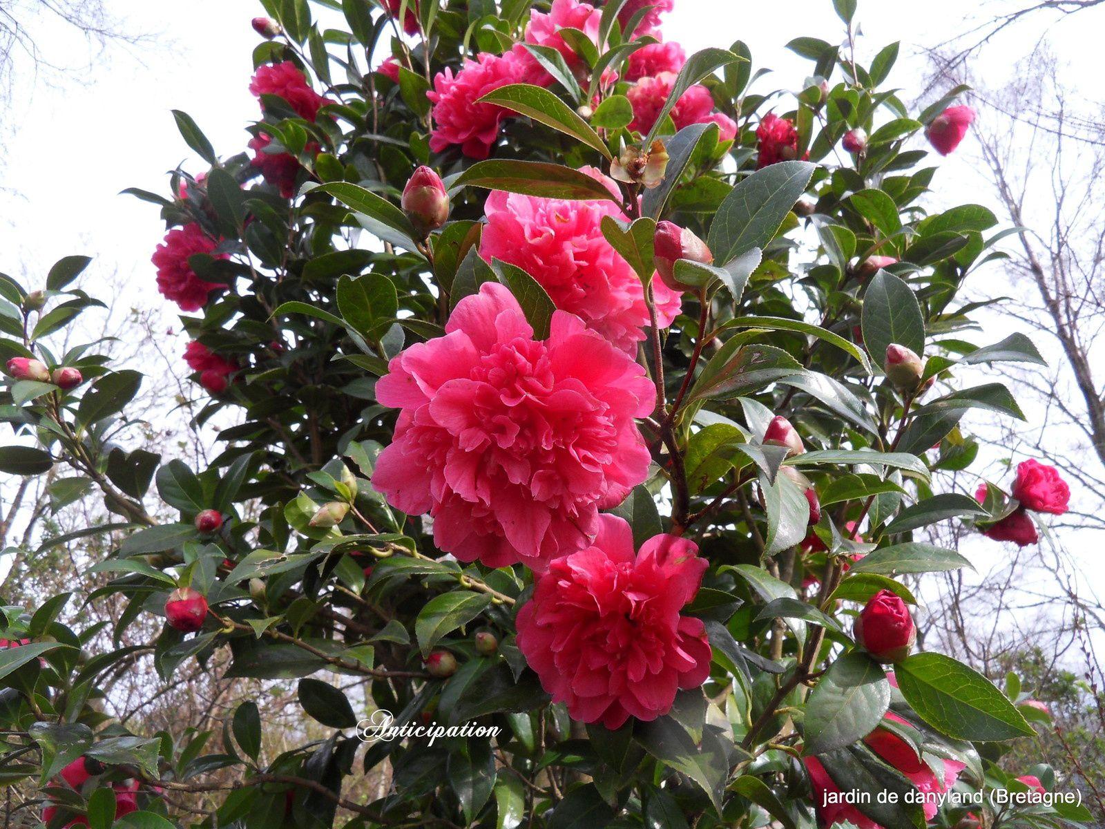 fin février au jardin !!!!