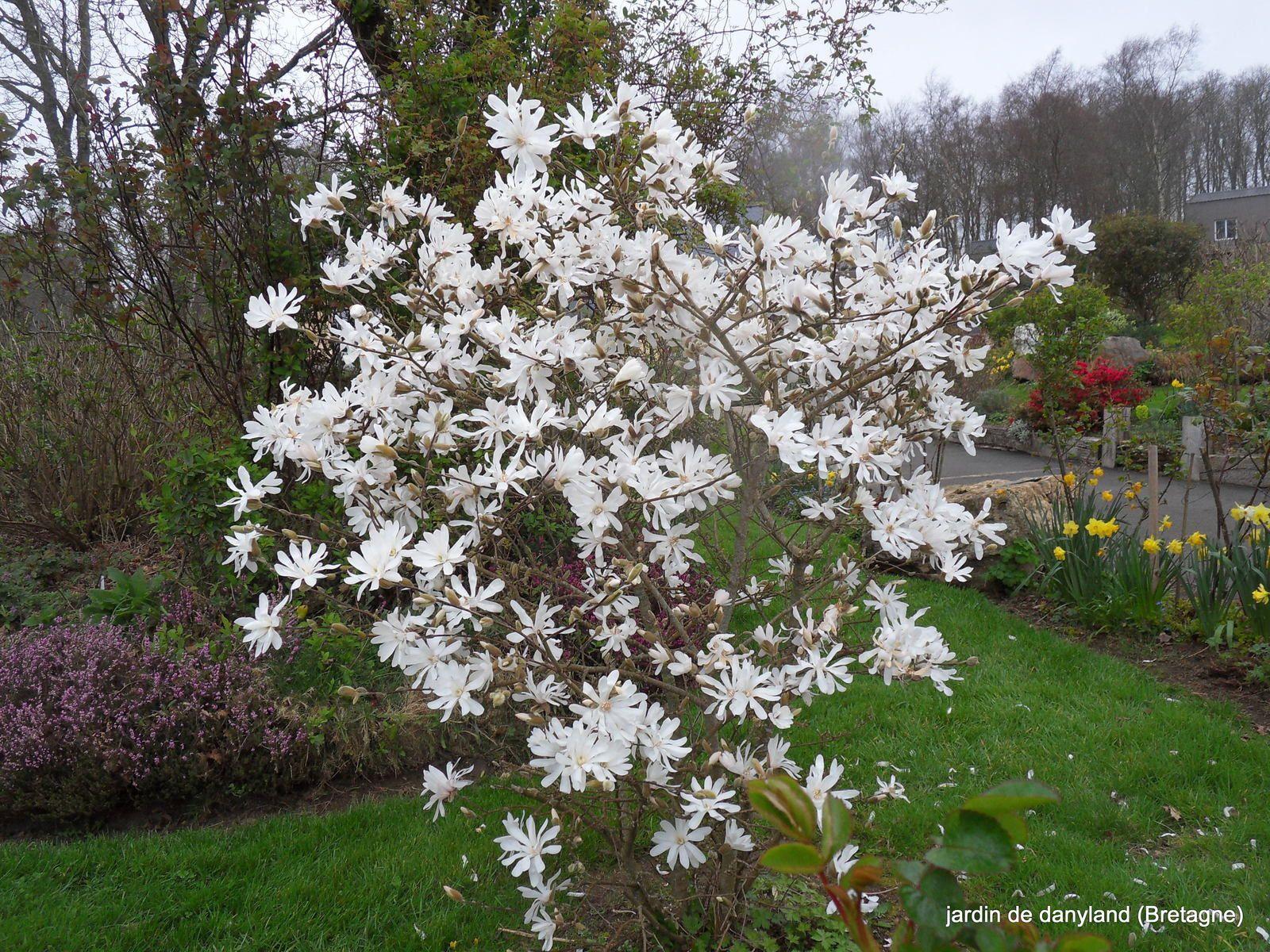 magnifique floraison en ce jour de printemps !!!!!