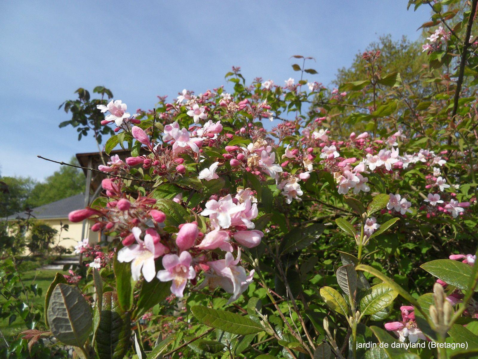 des floraisons exceptionnelles en cette fin avril 000