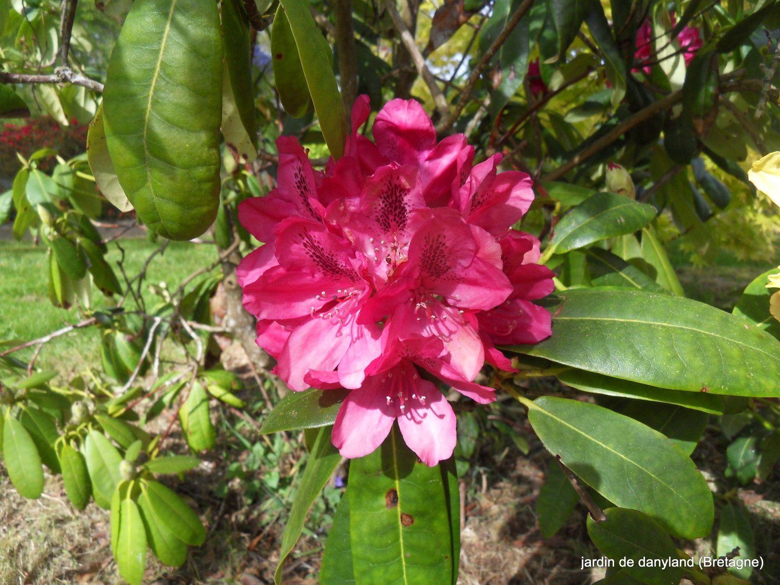 des floraisons exceptionnelles en cette fin avril 2017