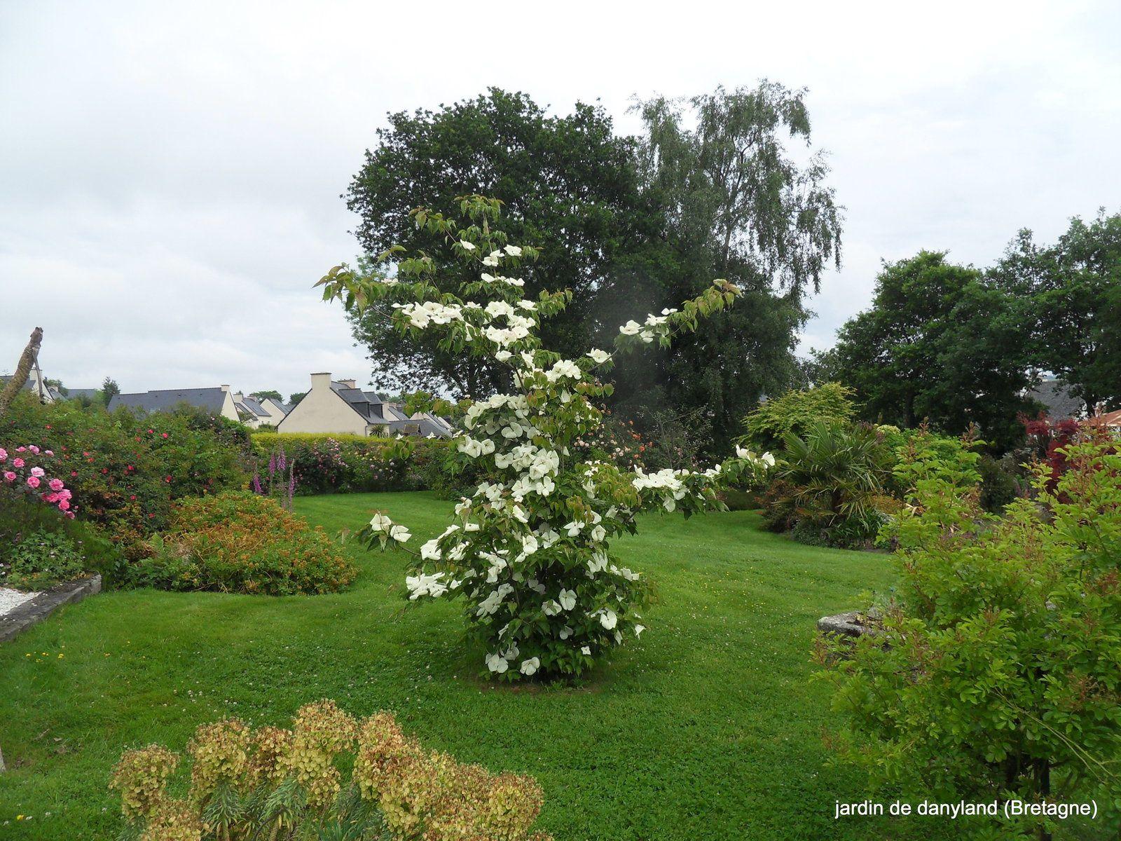 Roses du jardin de danyland