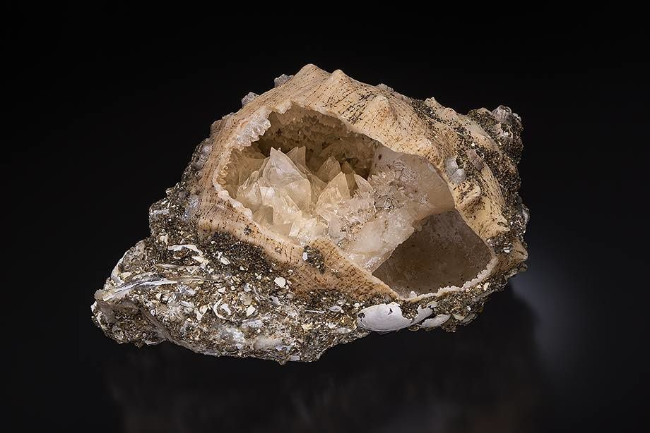 Calcite on Shell from Japan (Photo by Yasu Okazaki)